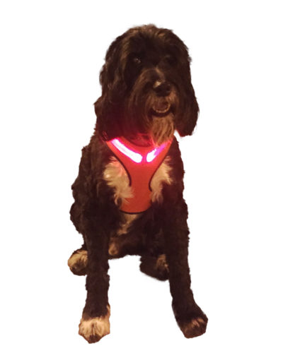 Putting safety first Royal Animals LED