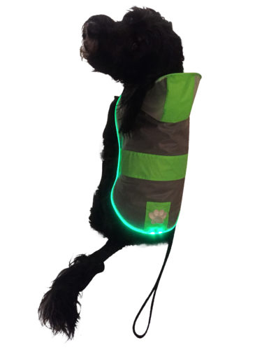 Royal Animals LED raincoat